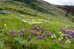 Blumen Wilde Blenden Seltene Feldblumen listeten im roten Buch auf Stockfoto
