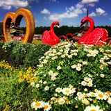 Blumen am Wunder-Garten lizenzfreie stockfotos