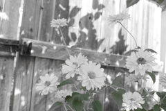 Blumen am Zaun Stockbilder