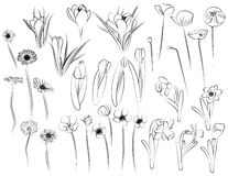 Blumen - Zeile Kunst Lizenzfreies Stockfoto