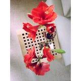 Blumen zu Hause lizenzfreies stockfoto