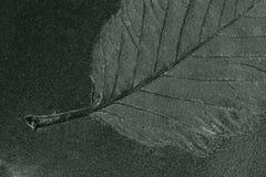 Blumenabdruck Lizenzfreie Stockfotos