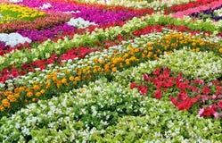 Blumenabstraktion mit Unschärfeeffekt Stockfotos