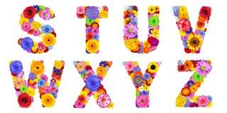 Blumenalphabet lokalisiert auf weiß- Buchstaben S, T, U, V, W, X, Y, Z Stockfoto