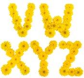 Blumenalphabet. V, w, x, y, z Stockbild