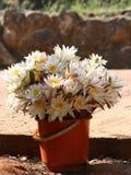 Blumenangebote an einem buddhistischen Kloster Stockbild