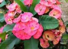Blumenanlage stockbilder