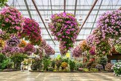 Blumenanlage Stockfoto