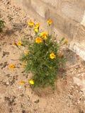 Blumenanlage stockbild