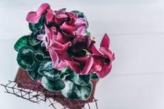 Blumenanordnung mit purpurroten Blumen lizenzfreies stockbild