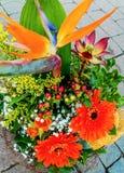 Bunte Anordnung mit Strelitzia, Mimose und Gerbera Lizenzfreie Stockbilder