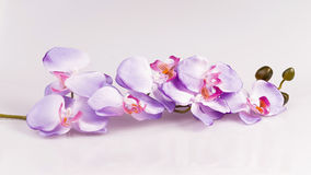 Blumenanordnung - orchises auf dem hellen Hintergrund Stockbild