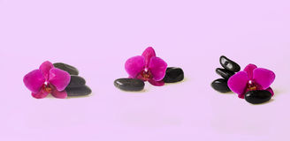 Blumenanordnung - orchises auf dem hellen Hintergrund Stockfotos