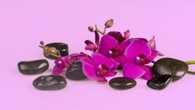 Blumenanordnung - orchises auf dem hellen Hintergrund Stockfotografie