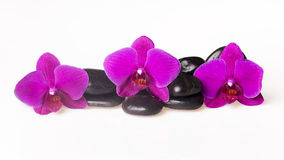 Blumenanordnung - orchises auf dem hellen Hintergrund Lizenzfreie Stockfotografie