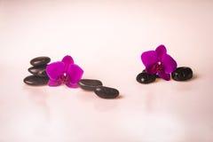 Blumenanordnung - orchises auf dem hellen Hintergrund Stockfoto