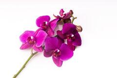 Blumenanordnung - orchises auf dem hellen Hintergrund Stockbilder