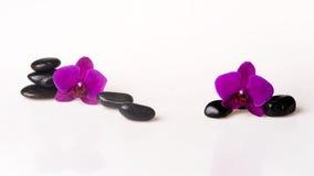 Blumenanordnung - orchises auf dem hellen Hintergrund Lizenzfreie Stockfotos