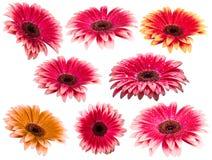 Blumenansammlung Lizenzfreie Stockfotos