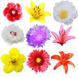 Blumenansammlung Lizenzfreie Stockfotografie