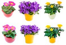 Blumenansammlung im Potenziometer Stockfoto
