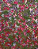 Blumenanzeige von bunten Blumen Lizenzfreies Stockfoto