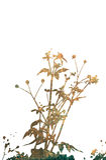 Blumenartbeschaffenheiten lokalisiert auf Weiß lizenzfreie stockfotografie