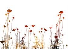 Blumenartfeld Stockfotografie