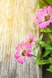 Blumenaufflackern-Sonnenlichteffekt stockbilder