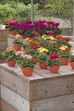 Blumenausstellung Lizenzfreies Stockfoto