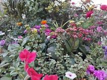 Blumenausstellung Lizenzfreie Stockfotos