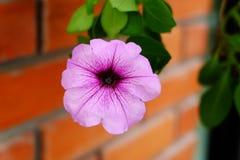 Blumenbacksteinmauer Lizenzfreies Stockfoto