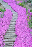 Blumenbahn lizenzfreies stockbild