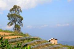 Blumenbauernhof auf dem Berg Lizenzfreie Stockbilder