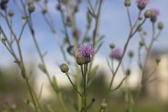 Blumenbecher Lizenzfreie Stockbilder