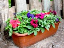 Blumenbeet Lizenzfreies Stockbild