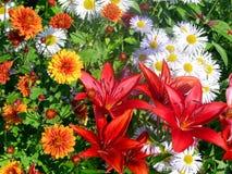 Blumenbeet Lizenzfreie Stockfotografie