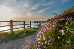 Blumenbeet in der Cornwall-Landschaft stockfotos