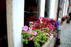 Blumenbeet in der Straße von Gdansk, Polen stockfoto
