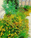 Blumenbeet geblüht Stockfotos