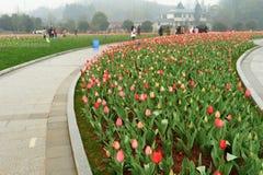 Blumenbeet im botanischen Garten Stockfoto