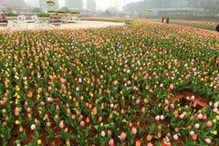 Blumenbeet im botanischen Garten Lizenzfreies Stockfoto