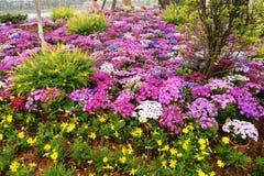 Blumenbeet im botanischen Garten Stockbilder