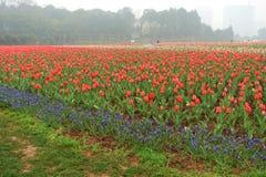 Blumenbeet im botanischen Garten Stockfotografie