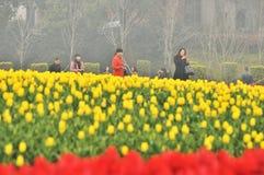 Blumenbeet im botanischen Garten Lizenzfreie Stockfotografie
