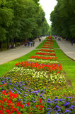 Blumenbeet im Park Stockbilder