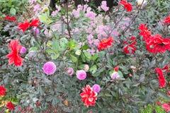 Blumenbeet im Rot und im Rosa Stockfoto