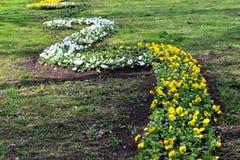 Blumenbeet im Stadtpark Lizenzfreies Stockbild