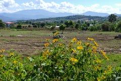 Blumenbeet mit Bergblick Stockfotos