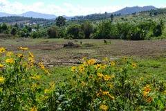 Blumenbeet mit Bergblick Stockbilder